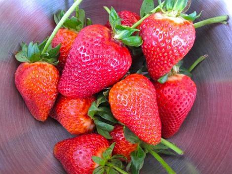 fresas-banadas-en-chocolate-1