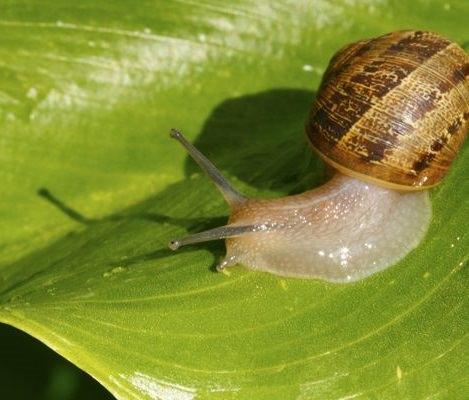 C mo eliminar las babosa y caracoles del jard n de forma casera - Como eliminar hormigas del jardin ...