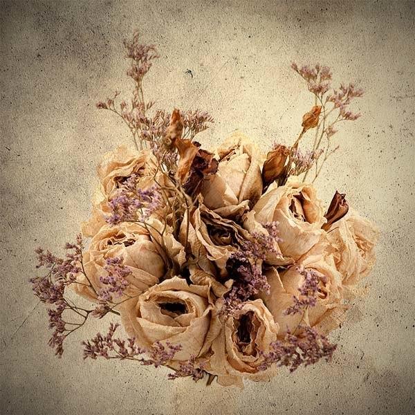 hacer-cuadros-de-flores-secas