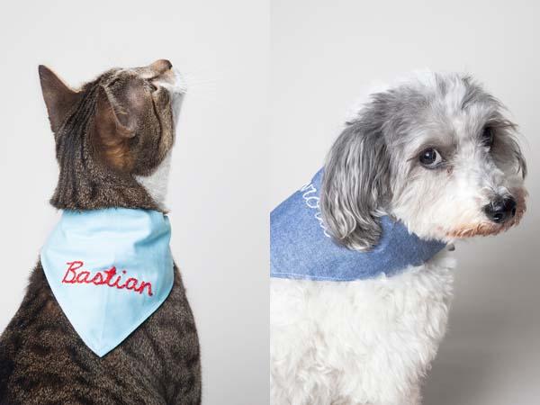 bandanas-para-nuestras-mascotas