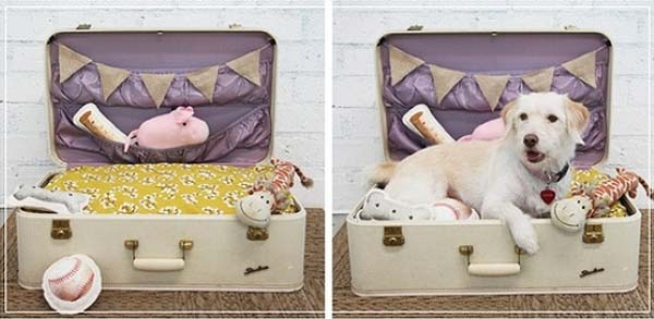 cama-para-mascotas-hecha-con-una-maleta